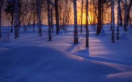 Winter, trees, thick snow, shadow, sunset