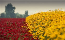 Preview wallpaper Yellow and red flowers, garden