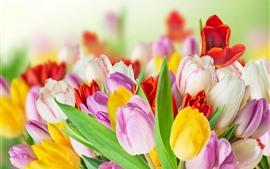 미리보기 배경 화면 노란색, 분홍색, 흰색 튤립, 꽃다발