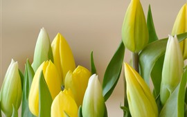 Yellow tulips, bouquet, flowers