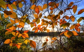 Preview wallpaper Autumn, yellow leaves, backlight, lake