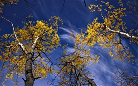 Autumn, yellow leaves, twigs, sky, clouds