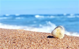 Preview wallpaper Beach, shell, sand, sea, hazy