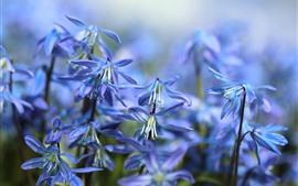 푸른 작은 꽃, 헷갈리는 봄