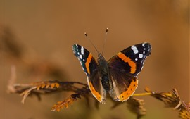 Preview wallpaper Butterfly, moth, antennae, wings