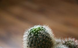 Кактус, иголка, растения
