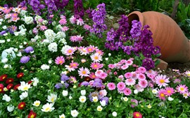 Preview wallpaper Colorful flowers, pink, white, purple, vase, garden