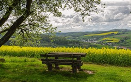 Preview wallpaper Countryside, rapeseed flowers, trees, bench, spring