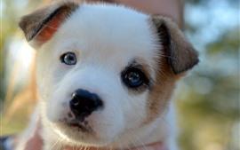 Filhote de cachorro bonito olhar para você, rosto, nebuloso