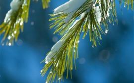 Еловые веточки, хвоя, снег, зима