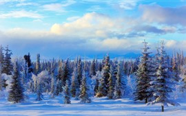 Preview wallpaper Forest, snow, trees, winter, clouds, art picture