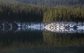 壁紙のプレビュー 森、木、湖、雪、水の反射、冬