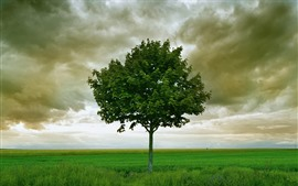 Preview wallpaper Lonely tree, grass, clouds, storm