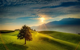 Lonely tree, green field, mountains, sunrise, fog, morning