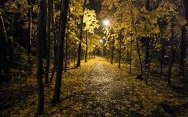 Night, park, trees, lights, autumn