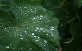 Uma folha verde, muitas gotas de água