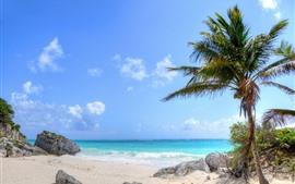 Palmier, rochers, plage, mer, vagues