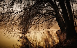 Park, pond, trees, twigs, autumn