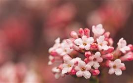 Pequenas flores rosa, gotas de água