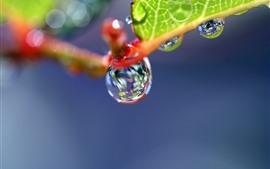 Fotografía macro de plantas, gotas de agua, fondo brumoso