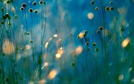 Растения, полевые цветы, туманные
