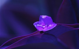 Preview wallpaper Purple flower macro photography, hazy background