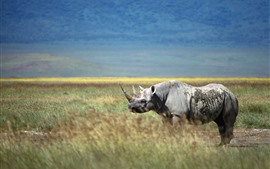Preview wallpaper Rhino, horn, grass, wildlife