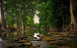 Rio, pedras, sequóias, floresta, verde
