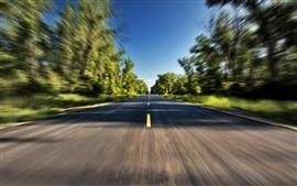 Route, vitesse, arbres, brumeux