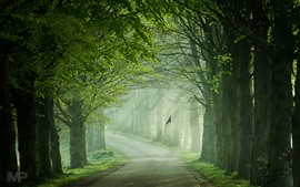 Road, trees, fog, birds, channel, green