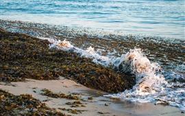 Sea waves, foam, plants