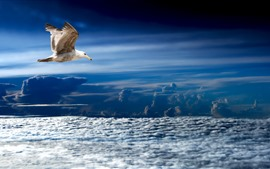 Preview wallpaper Seagull, flight, clouds, sky