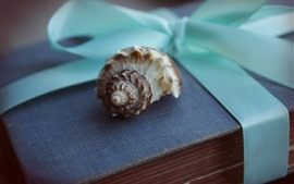 Shell and book, still life