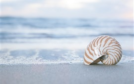 Preview wallpaper Shell, beach, sand, sea