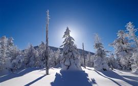 Vorschau des Hintergrundbilder Dicker Schnee, Bäume, Winter, Sonnenstrahlen, Schatten