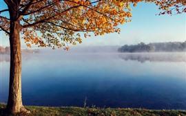 Дерево, желтые листья, озеро, туман, утро, осень