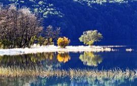 Aperçu fond d'écran Arbres, lac, herbe, eau claire, reflet
