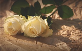 Duas rosas amarelas, sol