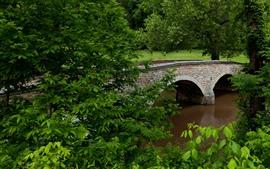США, Мэриленд, деревья, река, мост, зелень