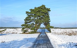 Preview wallpaper Winter, one tree, road, arch, snow