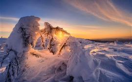 冬、厚い雪、日没、太陽光線