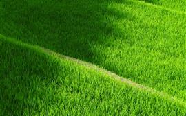 Yamada, grünes Reisfeld