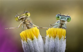 Preview wallpaper Yellow flower and dragonfly, insect