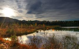 Outono, lago, árvores, grama, pôr do sol