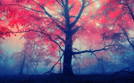 Preview wallpaper Autumn, trees, red leaves, fog
