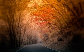 Preview wallpaper Autumn, trees, red leaves, road, fog