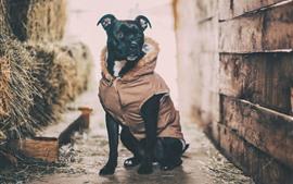 Черная собака, пальто