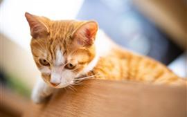 預覽桌布 可愛的小貓,朦朧的背景