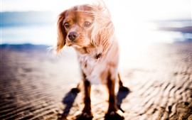 Preview wallpaper Dog, sunshine, backlight, beach, sea