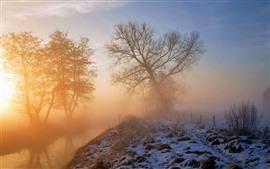Nevoeiro, árvores, neve, nascer do sol, inverno, nebuloso